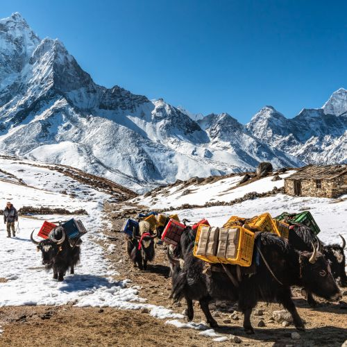 Yaks am Weg zum Mt Everest Basecamp Manfred Fink 14